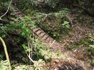 Waitakere Ranges -Fairy falls stairs, first of many
