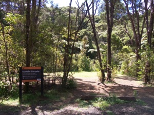 Waitakere Ranges - Opanuku Campground