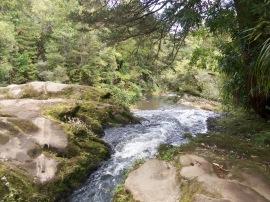 Waitakere Ranges - track to Nihotupu dam (2)