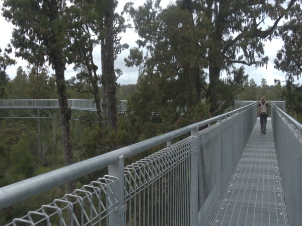 Treetops Walk - Hokitika (7)