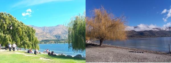Wanaka seasons